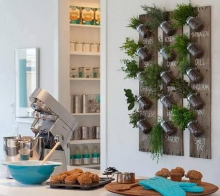 أعشاب مزروعة في المطبخ