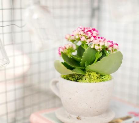 زهور في فنجان